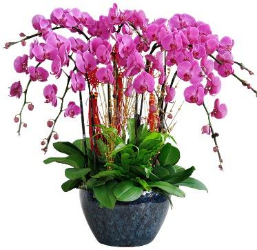 9 dallı mor orkide  Sinop kaliteli taze ve ucuz çiçekler