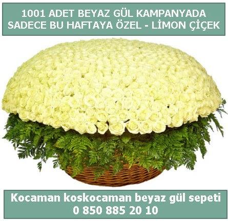 1001 adet beyaz gül sepeti özel kampanyada  Sinop ucuz çiçek gönder