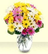 Sinop 14 şubat sevgililer günü çiçek  mevsim çiçekleri mika yada cam vazo
