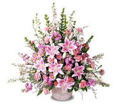 Sinop cicek , cicekci  Tanzim mevsim çiçeklerinden çiçek modeli