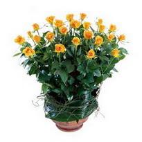 Sinop çiçek servisi , çiçekçi adresleri  10 adet sari gül tanzim cam yada mika vazoda çiçek