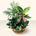 Sinop internetten çiçek satışı  5 adet canli çiçek sepette