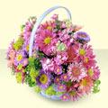 Sinop çiçek gönderme  bir sepet dolusu kir çiçegi  Sinop ucuz çiçek gönder
