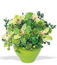 cam yada mika vazoda 5 adet orkide   Sinop çiçekçi telefonları