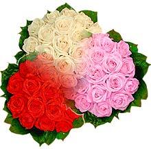 3 renkte gül seven sever   Sinop çiçekçiler