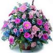 karisik mevsim kir çiçekleri  Sinop ucuz çiçek gönder