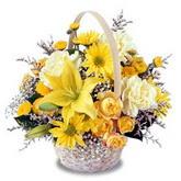 sadece sari çiçek sepeti   Sinop ucuz çiçek gönder
