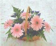 gerbera çiçeklerinde sepet   Sinop hediye çiçek yolla