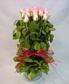 13 adet pembe gül silindirde   Sinop hediye çiçek yolla