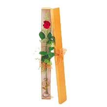 ince  kutuda  1  gül   Sinop hediye çiçek yolla