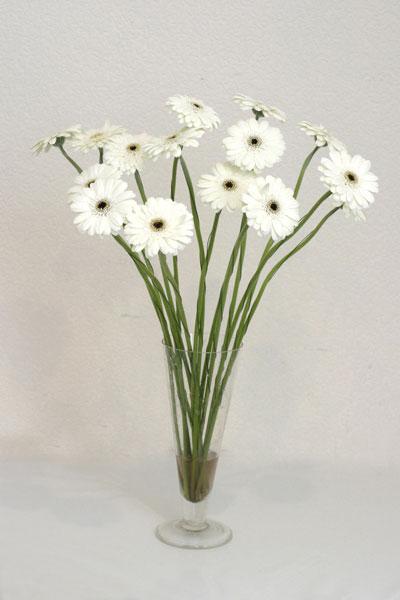 Sinop İnternetten çiçek siparişi  cam vazo içerisinde 17 adet sade gerbera