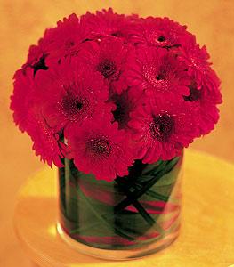 Sinop internetten çiçek siparişi  23 adet gerbera çiçegi sade ve sik cam içerisinde