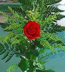 1 adet kirmizi gül buketi   Sinop anneler günü çiçek yolla