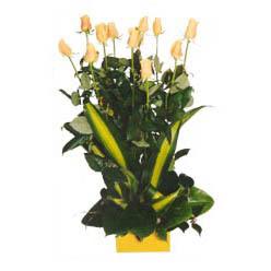 12 adet beyaz gül aranjmani  Sinop çiçek gönderme sitemiz güvenlidir