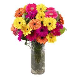 KARISIK GERBERALARDAN CAM VAZO TANZIMI  Sinop çiçek yolla