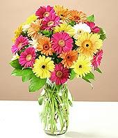 Sinop online çiçekçi , çiçek siparişi  17 adet karisik gerbera