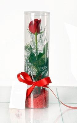 Sinop hediye çiçek yolla  Silindir vazoda tek kirmizi gül