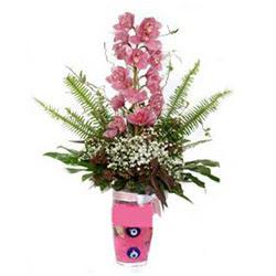 Sinop çiçek siparişi vermek  cam yada mika vazo içerisinde tek dal orkide çiçegi