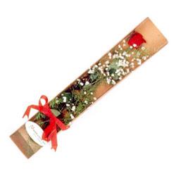 Sinop çiçekçiler  Kutuda tek 1 adet kirmizi gül çiçegi