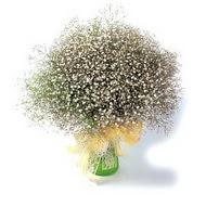 Sinop İnternetten çiçek siparişi  cam yada mika vazo içerisinde cipsofilya demeti