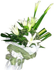 Sinop çiçek yolla  3 dal kazablanka çiçegi ve yesillikler