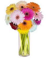 Sinop 14 şubat sevgililer günü çiçek  Farkli renklerde 15 adet gerbera çiçegi