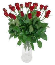 Sinop çiçek siparişi sitesi  11 adet kimizi gülün ihtisami cam yada mika vazo modeli