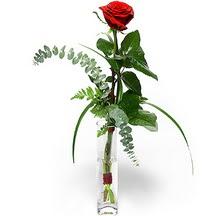 Sinop kaliteli taze ve ucuz çiçekler  Sana deger veriyorum bir adet gül cam yada mika vazoda