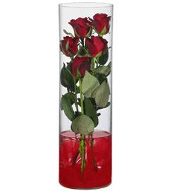 cam içerisinde 7 adet kirmizi gül  Sinop uluslararası çiçek gönderme