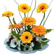 camda gerbera ve mis kokulu kir çiçekleri  Sinop çiçek siparişi sitesi