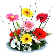 Sinop çiçek siparişi vermek  camda gerbera ve mis kokulu kir çiçekleri