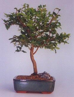 Sinop internetten çiçek siparişi  ithal bonsai saksi çiçegi  Sinop güvenli kaliteli hızlı çiçek
