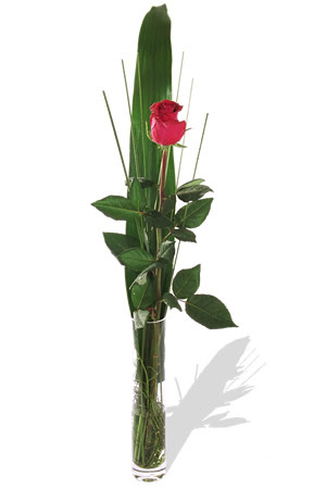 1 adet cam vazo içerisinde kirmizi gül  Sinop çiçekçiler