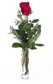 Vazo içerisinde 1 adet kirmizi gül  Sinop çiçek servisi , çiçekçi adresleri