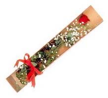 1 adet kirmizi gül  Sinop çiçek siparişi sitesi