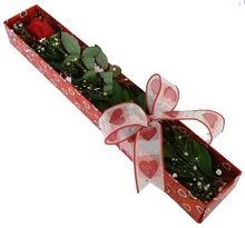 Tek kirmizi gül kutu içerisinde  Sinop çiçek yolla
