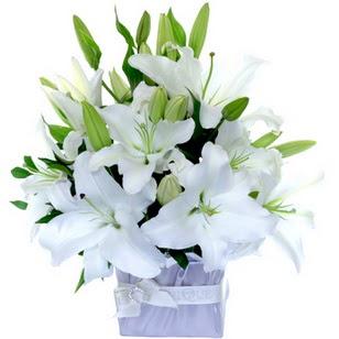 Sinop hediye çiçek yolla  2 dal cazablanca vazo çiçeği