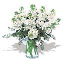 Sinop çiçek online çiçek siparişi  Vazoda beyaz güzel sebboylar