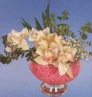 Sinop İnternetten çiçek siparişi  Dal orkide kalite bir hediye
