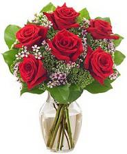 Kız arkadaşıma hediye 6 kırmızı gül  Sinop 14 şubat sevgililer günü çiçek