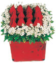 Sinop çiçekçi mağazası  Kare cam yada mika içinde kirmizi güller - anneler günü seçimi özel çiçek