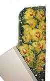 Sinop çiçekçi mağazası  Kutu içerisine dal cymbidium orkide