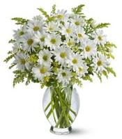 Vazo içerisinde beyaz krizantem çiçekleri  Sinop online çiçek gönderme sipariş