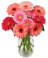 vazo içerisinde 13 adet gerbera çiçeği  Sinop cicek , cicekci