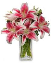 Vazo içerisinde 5 dal kazablanka çiçeği  Sinop çiçek servisi , çiçekçi adresleri