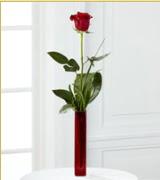 Vazo içerisinde 1 adet kırmızı gül  Sinop 14 şubat sevgililer günü çiçek