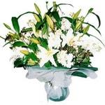 Sinop online çiçek gönderme sipariş  Kazablanka ve gerbera demeti