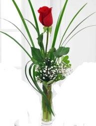 Cam içerisinde 1 kırmızı gül  Sinop ucuz çiçek gönder