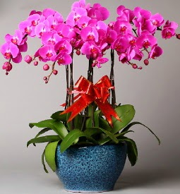 7 dallı mor orkide  Sinop online çiçekçi , çiçek siparişi