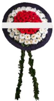 mozele çiçeği  Sinop yurtiçi ve yurtdışı çiçek siparişi
